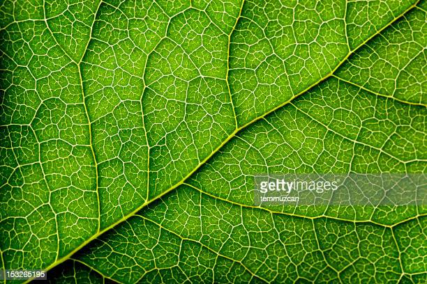 leaves series - close up stockfoto's en -beelden