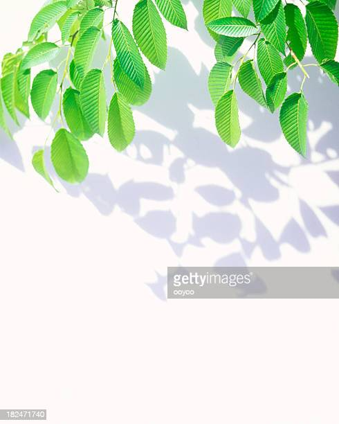 Leaves & Shadows
