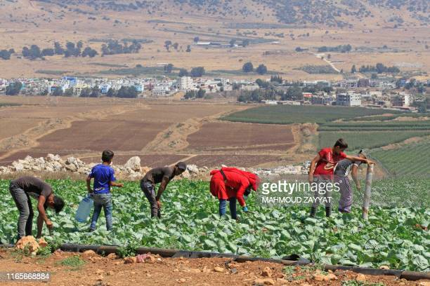 Lebanese and Syrian farmers work in the plain Khiam opposite the divided town of Ghajar in the Golan Heights on September 2, 2019. - An escalation...