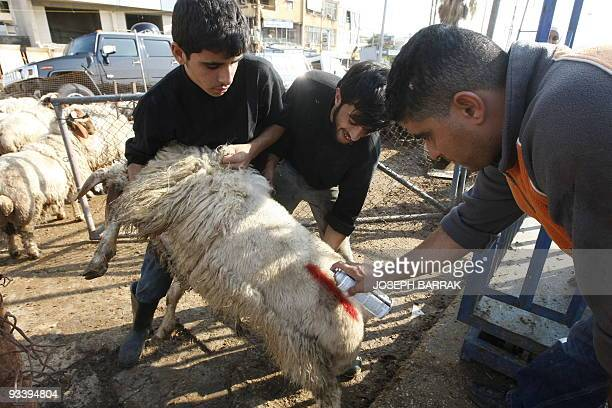 A Lebanese animal vendor marks sheep with red spray before selling them to Muslim clients for the feast of sacrifice known in Arabic as Eid alAdha in...