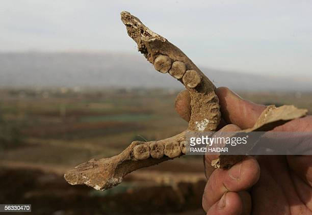 Lebanese man shows parts of human remains uncovered from a mass grave near the former Syrian military intelligence headquarters in the eastern town...