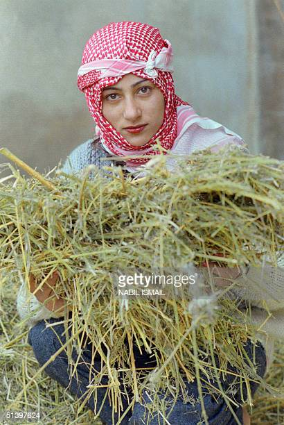 Lebanese Moslem peasant displays 16 December 1987 a handful of her fathers's dry cannabis branches ready to be transformed in second quality hashish...