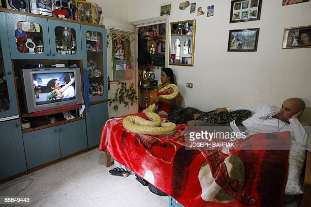 Lebanese snake hobbyist Pierre Rizk and his Sri Lankan wife Sapa watch television with two of their Indian Python snakes in their flat in Dekwaneh,...