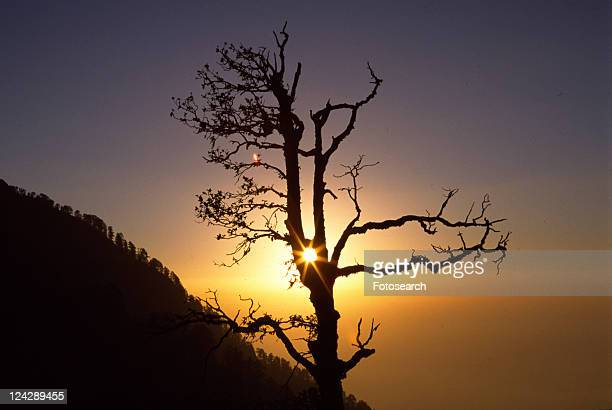 lebensenergie, back light, bereisen, branch, branches out, calm, climatic heating