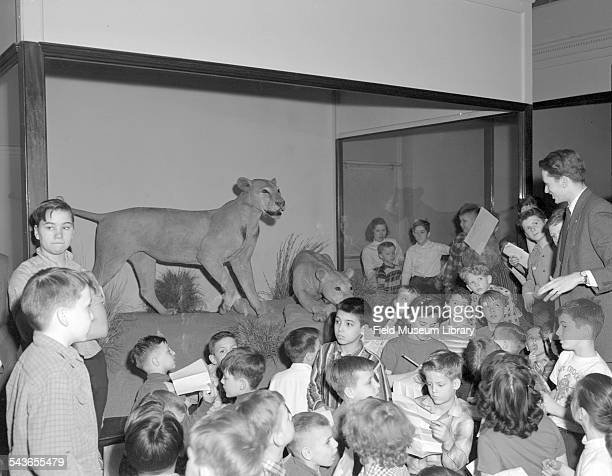 A lecturer possibly the students' teacher speaks to children standing next to the Tsavo Lions exhibit case Field Museum Chicago Illinois March 1958