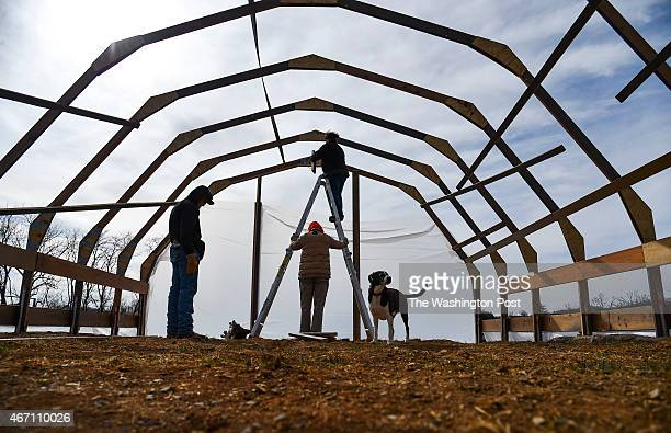 Lee Spiegel staples a plastic covering on her new greenhouse as her stepfather Bill Opengari holds the ladder while volunteer John Smith left and...