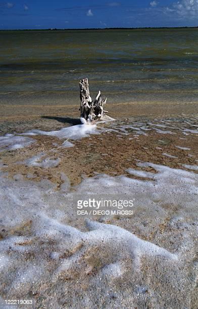 Leeward Islands Virgin Islands Anegada Island Flamingo Pond
