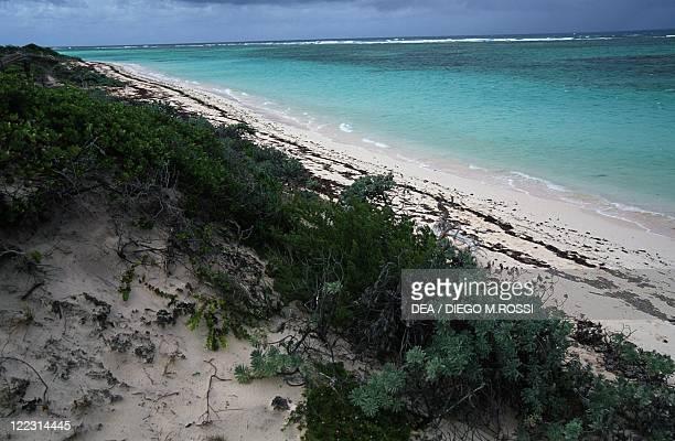 Leeward Islands Virgin Islands Anegada Island Windlass Bight vegetation along beach
