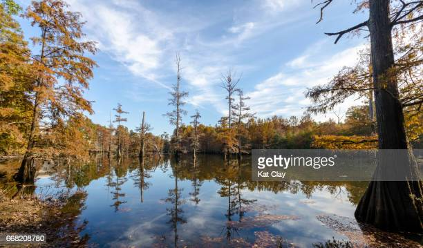 lefleur's bluff state park, jackson - mississippi stock pictures, royalty-free photos & images