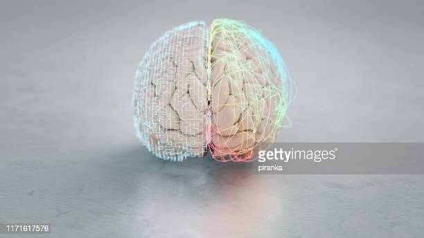 left and right brain hemisphere - human brain stock pictures, royalty-free photos & images