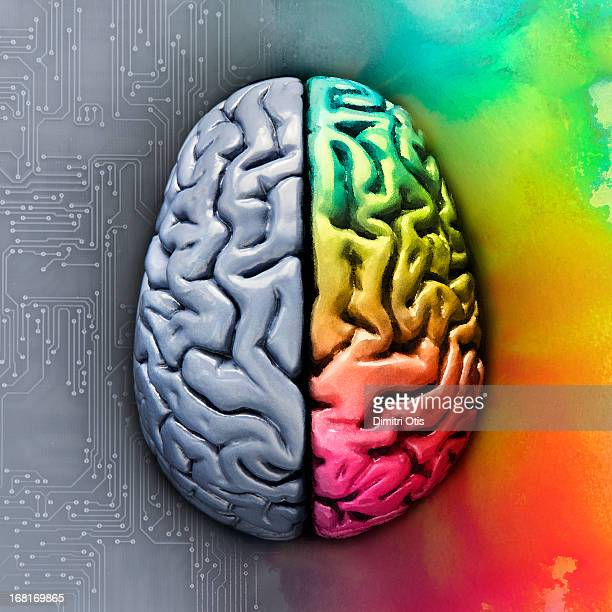 Left and right brain showing different functions