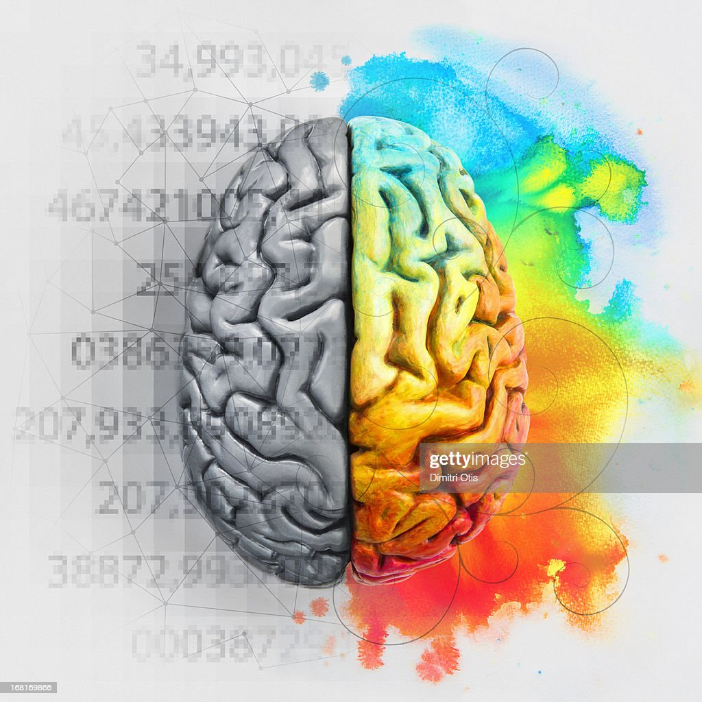 Left and right brain showing different functions : Stock Photo