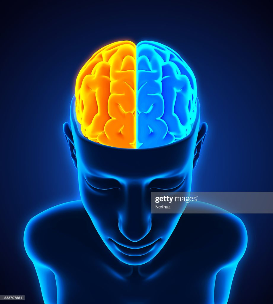 Left and right human brain anatomy stock photo getty images left and right human brain anatomy stock photo ccuart Gallery