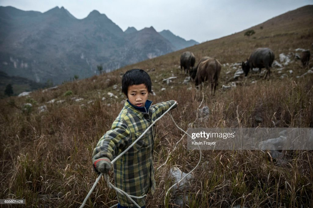 Luo Gan, 10, tends to the family cows in the fields. Photo by Kevin Frayer/Getty Images