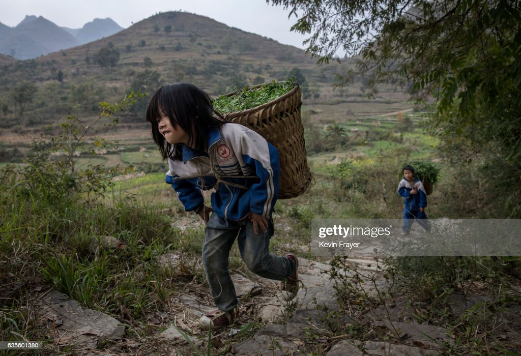 'Left behind' children Luo Hongni, 11 (L) and brother Luo Gan,10, carry flowers to be used as feed while doing chores in the fields on December 18, 2016 in Anshun, China. Like millions of Chinese children, the four Luo siblings are being raised by their grandparents in rural China as their parents left for cities to find work. Photo by Kevin Frayer/Getty Images