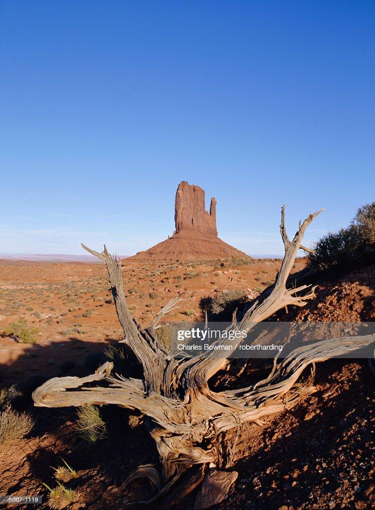 Left Mitten Butte, Monument Valley, Arizona, USA : Stockfoto