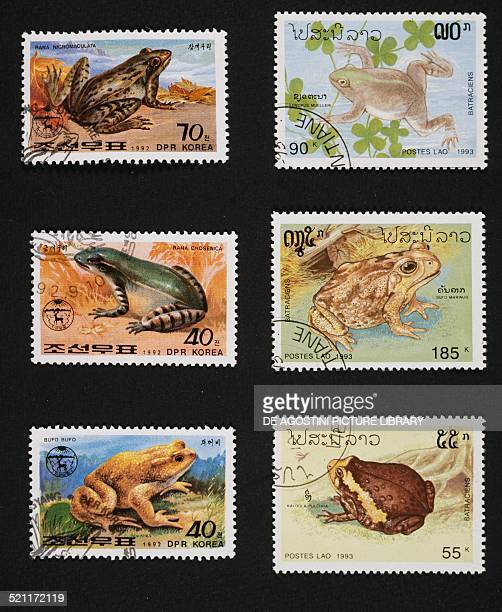 Left postage stamps honouring Frogs and toads depicting from top to bottom Darkspotted frog Seoul pond frog Common toad North Korea right postage...