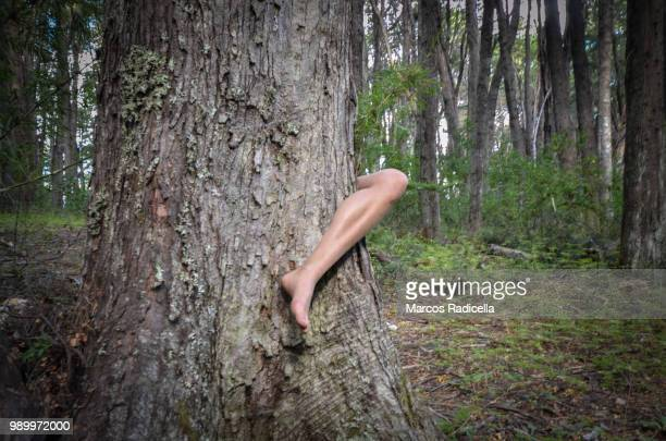leg pocking out of tree - radicella stock pictures, royalty-free photos & images