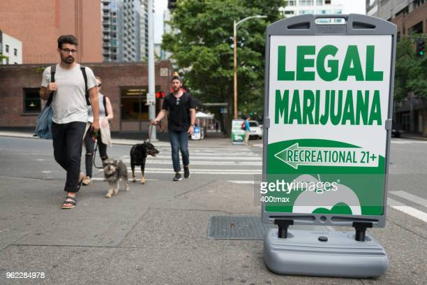 legal marijuana - cannabis plant stock photos and pictures