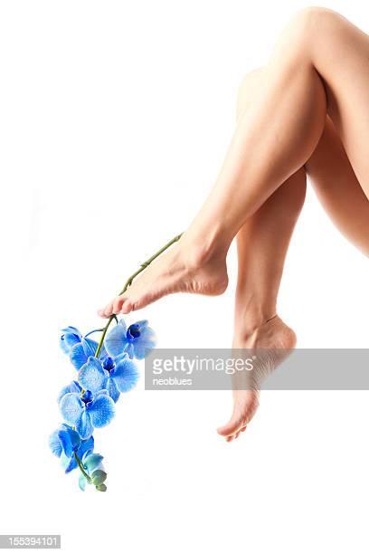 Beine und Orchid