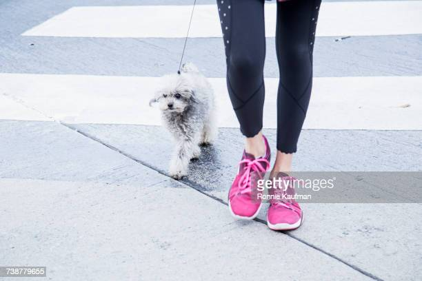 Legs of Caucasian woman walking dog in crosswalk