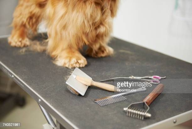 Legs of cocker spaniel standing on table at dog grooming salon