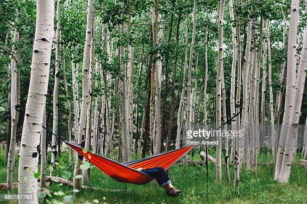 Legs of man reclining in hammock in forest, Lockett Meadow, Arizona, USA