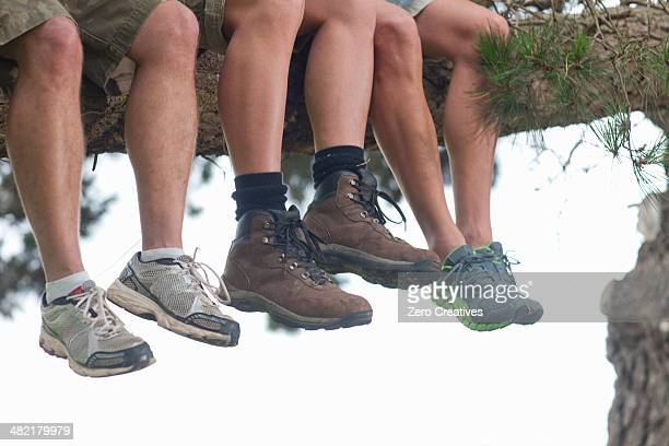 Legs of three male hikers sitting on tree branch