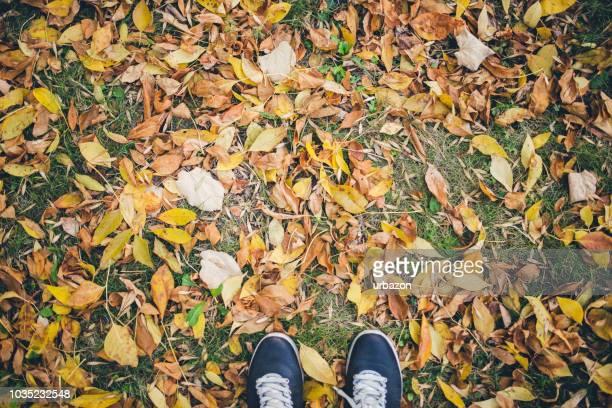 legs standing on fallen leaves - parte inferior imagens e fotografias de stock