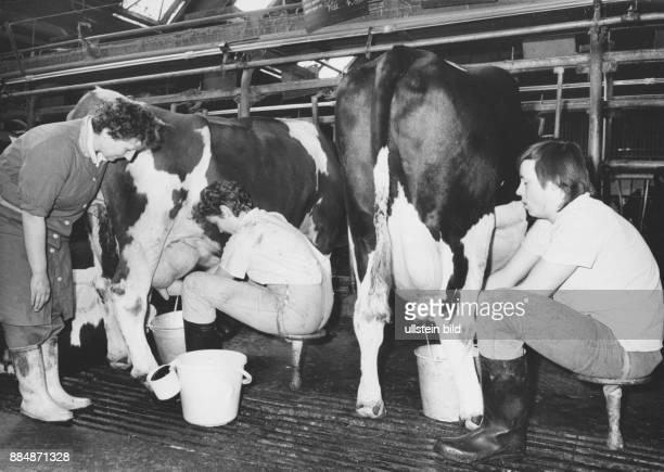 Lehrlinge beim Handmelken LPG Berlstedt bei Weimar 1989