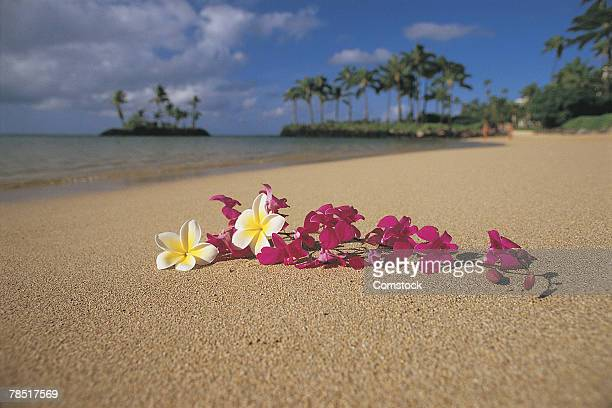 lei on beach , oahu , hawaii - lei day hawaii stock pictures, royalty-free photos & images