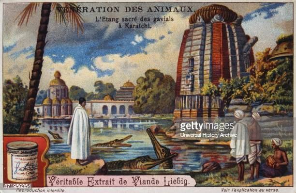 Leibig card showing the worship of the Gharial in an India near a Hindu temple Circa 1900 The gharial also known as the gavial and the fisheating...
