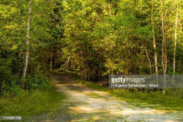 Leisure Hiking Exploring A Green Forest Pathway Into The Peaceful Wilderness With Sunrays Through...