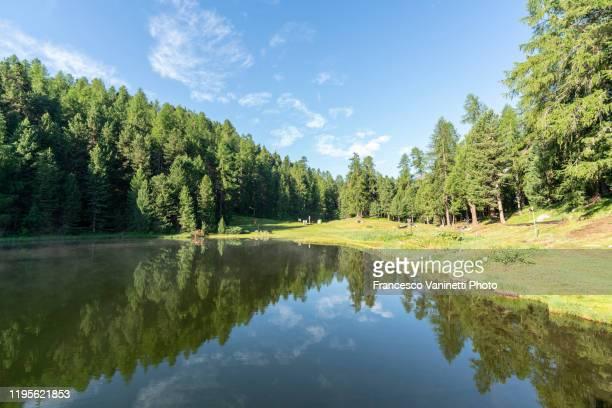 lej marsch/marsch lake in summer, engadin, switzerland. - seeufer stock-fotos und bilder