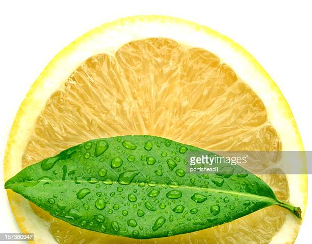 lemon and leaf - lemon leaf stock photos and pictures