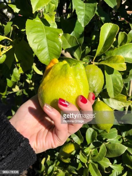 lemon in my hand