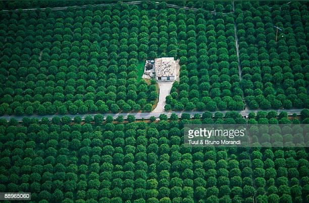 Lemon trees field, Aerial view, Sicily, Italy
