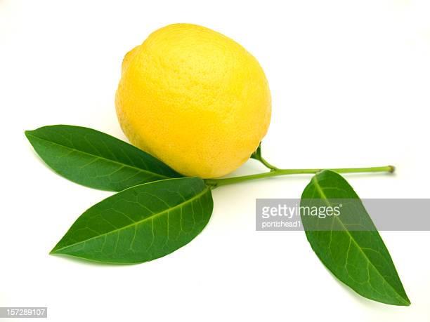 lemon twig - lemon leaf stock photos and pictures