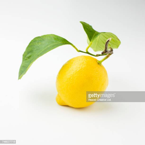 a lemon with a stem and leaves - lemon leaf stock photos and pictures