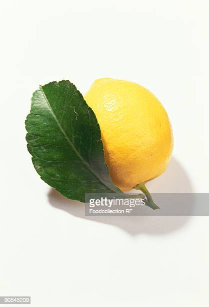 lemon with leaf on white background, close up - lemon leaf stock photos and pictures