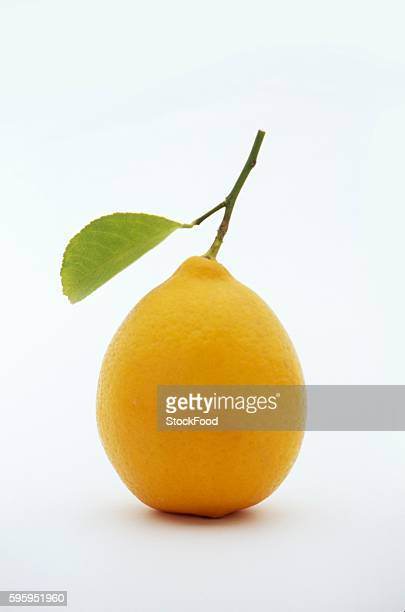 a lemon with leaf - lemon leaf stock photos and pictures