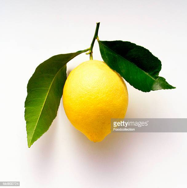 a lemon with leaves - lemon leaf stock photos and pictures