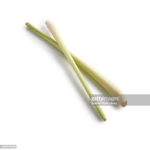 lemongrass - erva cidreira imagens e fotografias de stock