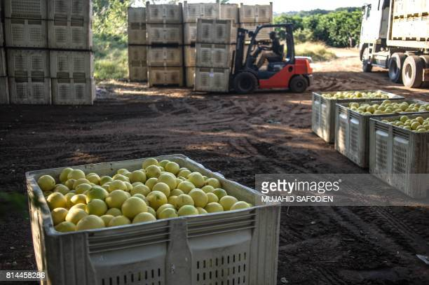 Lemons are stored at a farm which was successfully claimed back by the mainly black community and then leased to the former white owner on June 7...