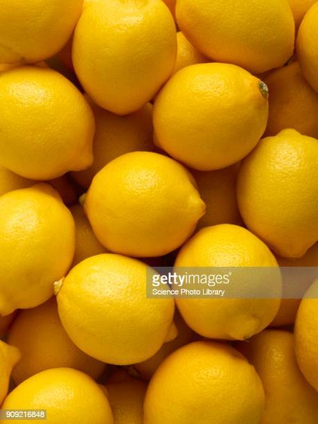 lemons - lemon stock pictures, royalty-free photos & images