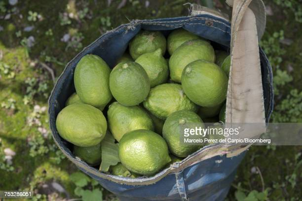 Lemons sit in a bag at a farm in Argentina