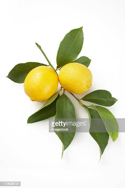 Lemons with leaves on white background