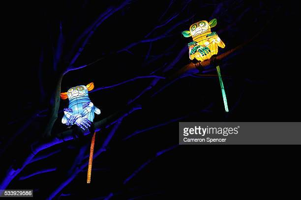 Lemur light sculptures are displayed in a tree during a media preview of Vivid Sydney illuminated displays at Taronga Zoo on May 24 2016 in Sydney...