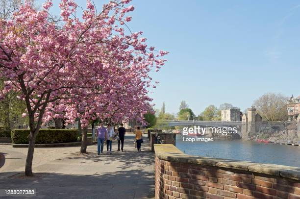 Lendal Bridge and riverside in spring.