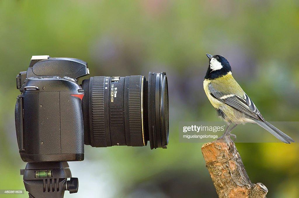 Lens and bird : Stock Photo